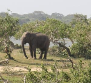 Elephant of the day